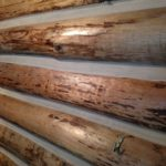 Chinking a wall on a log home by Wild Wood Log Home Restoration.